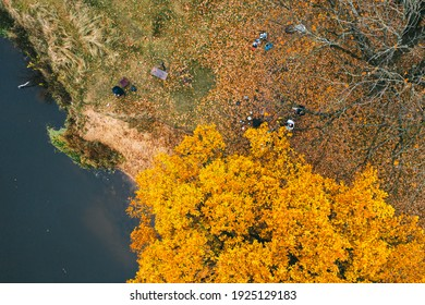 Picturesque picnic spot. Grove of oaks near the river