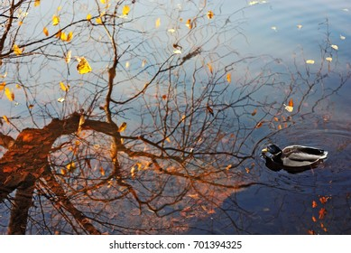 Picturesque reflection of the tree and duck on the water