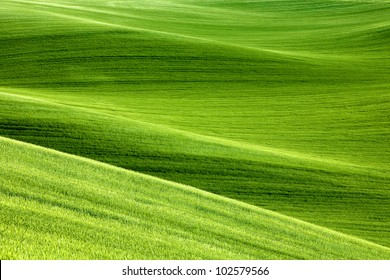 picturesque rolling hills of green wheat fields of wheat