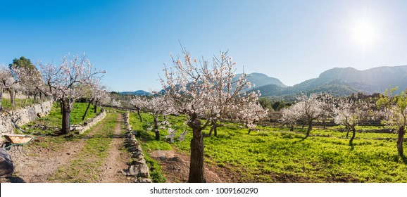 Picturesque rural landscape of Mallorca, Spain