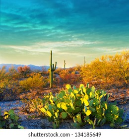 Picturesque, serene sunset in Saguaro National Park - Sonoran Desert - American Southwest.