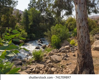Picturesque shore of the mountain river Jordan with eucalyptus trees on the shore. Israel.
