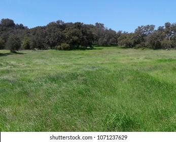 Picturesque spring meadow in Topanga Canyon, California.