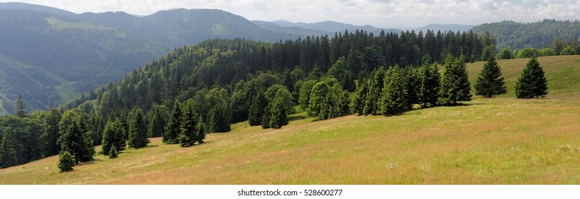 Picturesque spruce grove on slope of Feldberg mountain in Schwarzwald, Germany