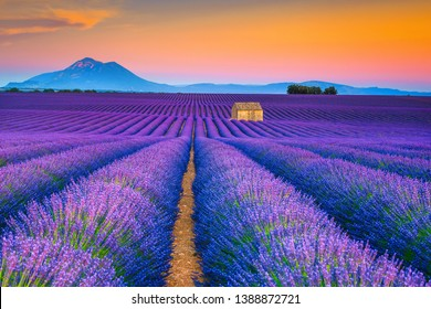 Picturesque summer nature landscape and agriculture area. Popular travel and photography place with beautiful purple lavender fields at sunset, Valensole, Provence, France, Europe