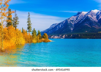 Picturesque turquoise Abraham Lake in a flood. Journey to the Golden Autumn in Rocky Mountains. The flooded coastal gold aspen grove. The concept of ecological and active touris