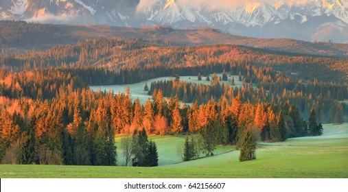 Picturesque valley at the sunrise. Morning sun illuminate tops of christmas trees. Beautiful spring landscape of Alpine meadow.