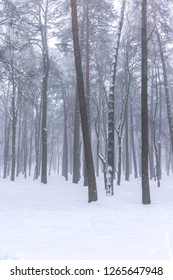 picturesque view of bare forest trees standing in white snow against grey sky background during foggy weather