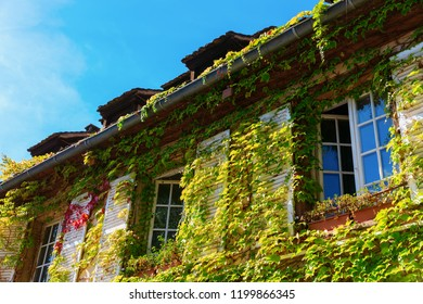 picturesque vine-clad facade of an old house in Strasbourg, France