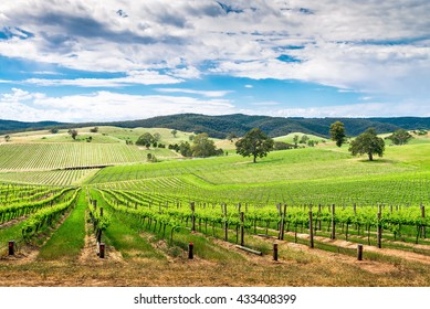 Picturesque wine valley in Barossa, South Australia. Color-toning effect appplied