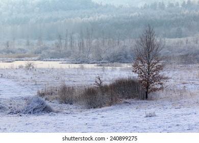 Picturesque Winter