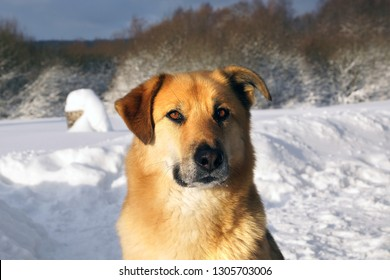 picturesque winter landscape with dog close up photo.