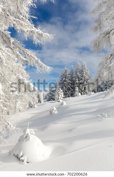 Picturesque winter landscape. Vertical shot