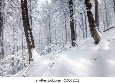 Picturesque winter scene in the beech forest