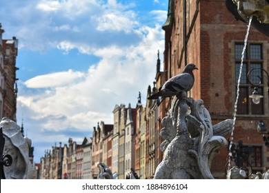 Pidgeon bird sitting on top of a fountain sculpture with historic colored houses in the background