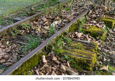 A piece of abandoned railway with grass, moss and dry leaves