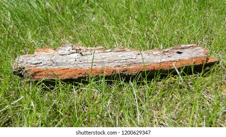 A piece of bark on the green grass