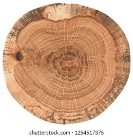 Piece of circular wood cross section with tree growth rings. Oak tree stump texture isolated on white background