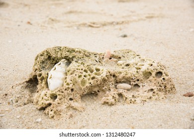 Piece of coral reef and sea shells on the beach