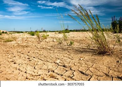 PIECE OF DESERT WITH RARE GRASS