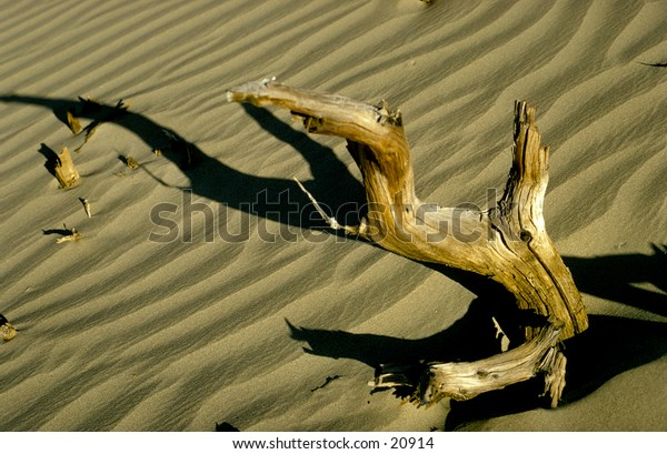 Piece of drift wood in Death Valley