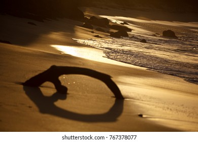 A piece of driftwood embedded in the sand of a beach in Antigua. Shot against the sunset with natural sepia tone.