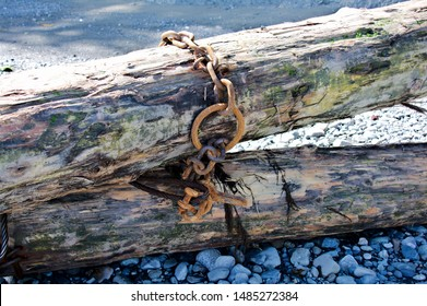 Piece of driftwood metal chain wrapped around rusty exposure salt water decaying wood texture background