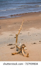 A piece of driftwood on the beach of Prince Edward Island, Canada