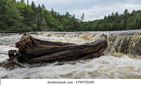 Piece of driftwood on the lower Tahquamenon Falls in Michigan's Upper Peninsula on a cloudy summer day
