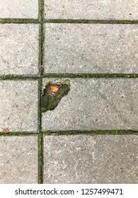 A piece of gray rectangular pavement slabs.