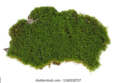 Piece of green moss on white background, top view.