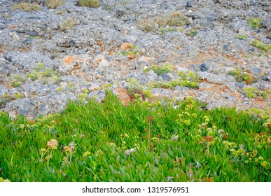 a piece of green vegetation on the rocky underground near Sisi on Crete in Greece