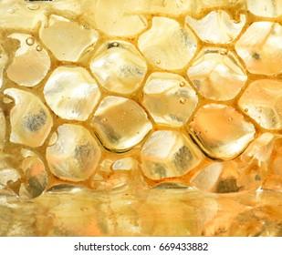 piece of honeycomb in honey. Macro photography in the studio.