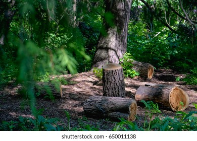 Piece of log wood in the forest