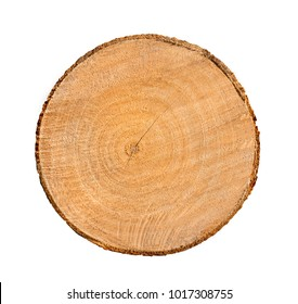 Piece of round wood tree rings cross section with cracks and texture. Fresh cut tree with cut rough surface isolated on white.
