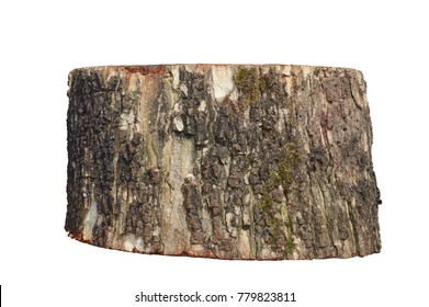 piece of tree on white background