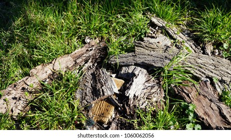 pieces of bark on grass on a sunny day