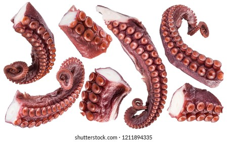 Pieces of cooked devil-fish or octopus tentacles (arms). File contains clipping paths.