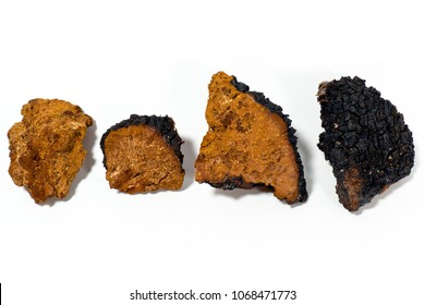 Pieces of foraged medicinal chaga mushroom displayed against a white background.