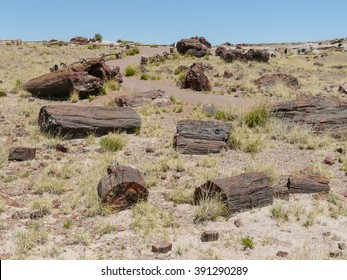 Pieces  of petrified trees in Petrified Forest National Park