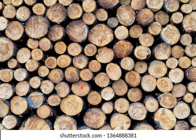 pieces of wood after cutting in a forest