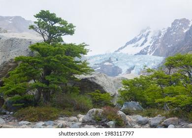 Piedras Blancas Glacier view, Los Glaciares National Park.  El Chalten, Patagonia