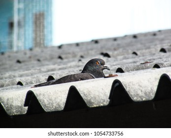 piegon sitting on a rooftop in urban setting