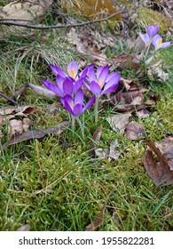Piekne kwiaty polskie pelnia kolorow - Shutterstock ID 1955822281