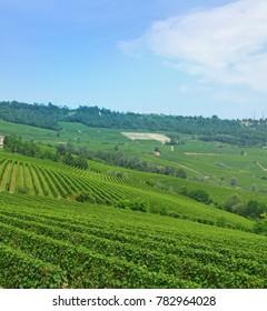 Piemonte vineyards, Italy