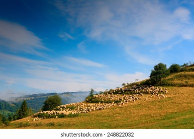 Pieniny Sheep - Shutterstock ID 248822032