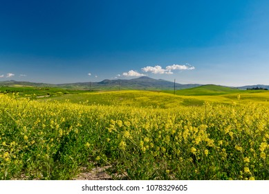 Pienza, Siena - April 21 2018: panorama of the Val D'Orcia, homeland of Brunello wine in Tuscany during spring flowering with yellow meadows and blue sky