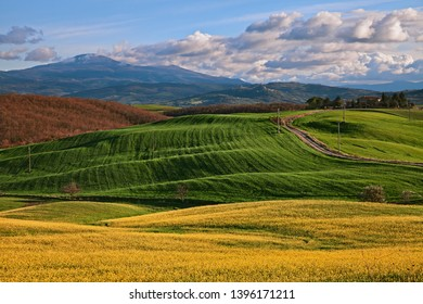 Pienza, Siena, Tuscany, Italy: landscape of the Val d'Orcia countryside with picturesque green fields, yellow flowers and Mount Amiata in the background