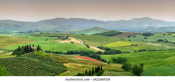 Pienza, Tuscany - June 2019: beautiful landscape of Tuscany in Italy, Podere Belvedere in Val d Orcia near Pienza with cypress, olive trees and green rolling hills. Siena, Italy.