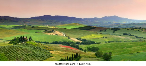 Pienza, Tuscany - June 2019: beautiful landscape of Tuscany in Italy, Podere Belvedere in Val d Orcia near Pienza with cypress, olive trees and green rolling hills at sunset. Siena, Italy.